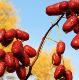 经期能吃红枣吗,经期可以吃红枣吗,月经期能吃红枣么
